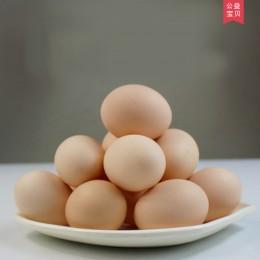 电商扶贫公益专区——宋三家养土鸡蛋
