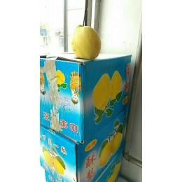 出售自己家的套袋酥梨,10元6斤,送货上门